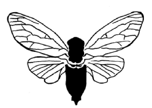 sharpDewpoint_Dragonfly copy